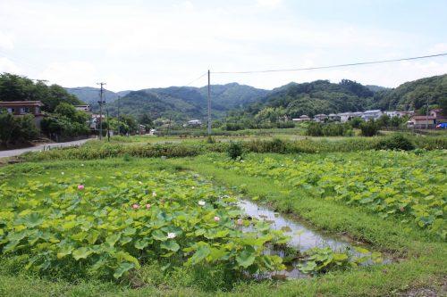 福島県福島市 花見山公園の情報 2018年7月12日 IMG_4906