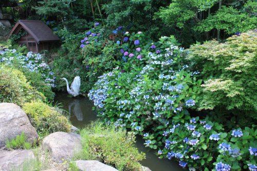 福島県福島市 花見山公園の情報 2018年7月12日 IMG_4909