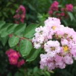福島県福島市 花見山公園の情報 2018年8月6日 IMG_5131