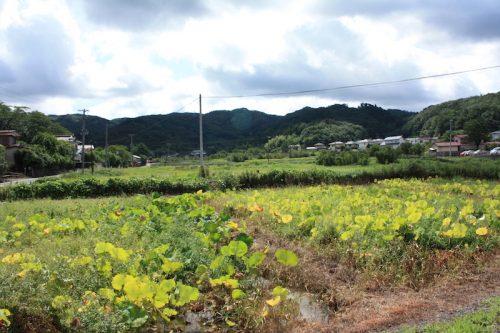 福島県福島市 花見山公園の情報 2018年9月5日 IMG_5159