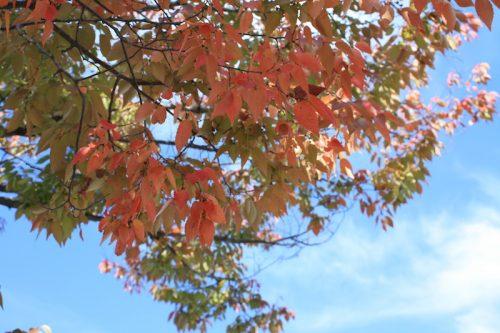 福島県福島市 花見山公園の情報 2018年10月26日 IMG_5349