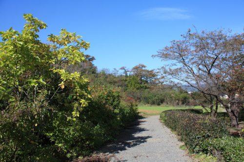 福島県福島市 花見山公園の情報 2018年10月26日 IMG_5351