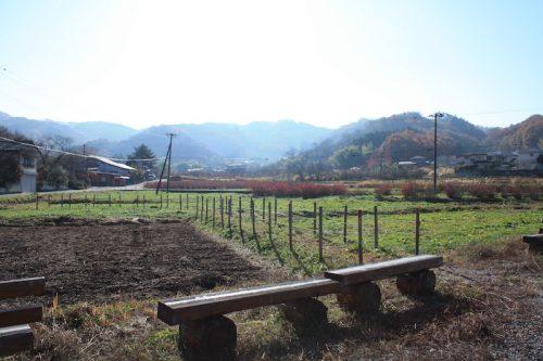 福島県福島市 花見山公園の情報 2018年11月27日 IMG_5489