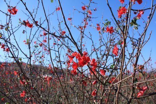 福島県福島市 花見山公園の情報 2018年11月27日 IMG_5499