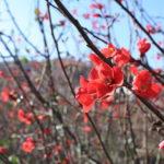 福島県福島市 花見山公園の情報 2018年11月27日 IMG_5500