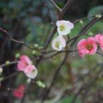 福島県福島市 花見山公園の情報 2018年12月11日 IMG_5506