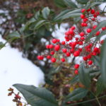 福島県福島市 花見山公園の情報 2019年1月11日 IMG_5520