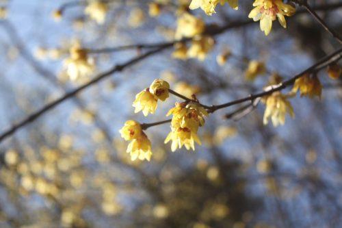 福島県福島市 花見山公園の情報 2019年2月7日 IMG_5532