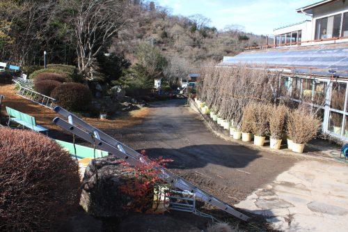 福島県福島市 花見山公園の情報 2019年2月7日 IMG_5536