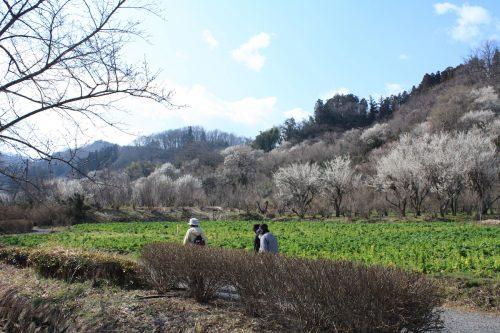 福島県福島市 花見山公園の情報 2019年3月13日 IMG_5663