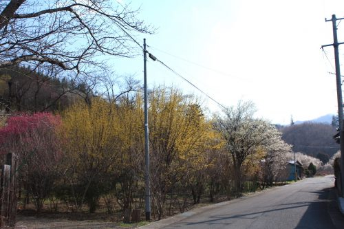 福島県福島市 花見山公園の情報 2019年3月13日 IMG_5668