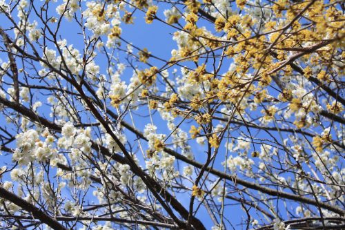 福島県福島市 花見山公園の情報 2019年3月13日 IMG_5670