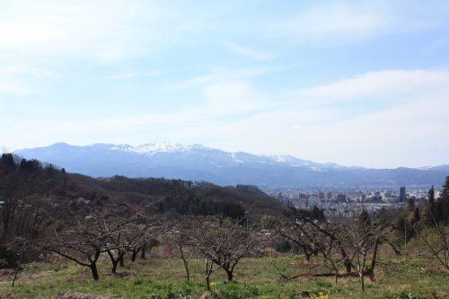 福島県福島市 花見山公園の情報 2019年3月26日 IMG_5681