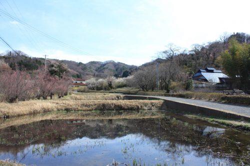 福島県福島市 花見山公園の情報 2019年3月26日 IMG_5684