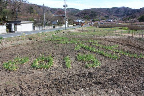 福島県福島市 花見山公園の情報 2019年3月26日 IMG_5687