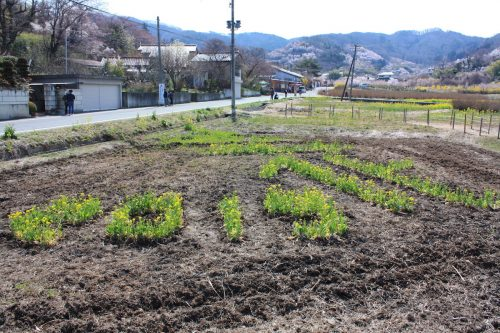 福島県福島市 花見山公園の情報 2019年4月5日 IMG_5695