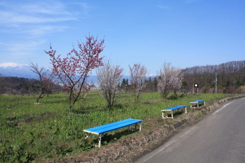 福島県福島市 花見山公園の情報 2019年4月5日 IMG_5701