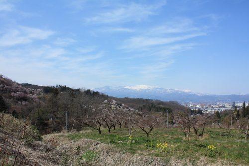 福島県福島市 花見山公園の情報 2019年4月5日 IMG_5702