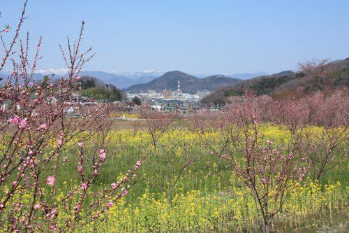 福島県福島市 花見山公園の情報 2019年4月5日 IMG_5707