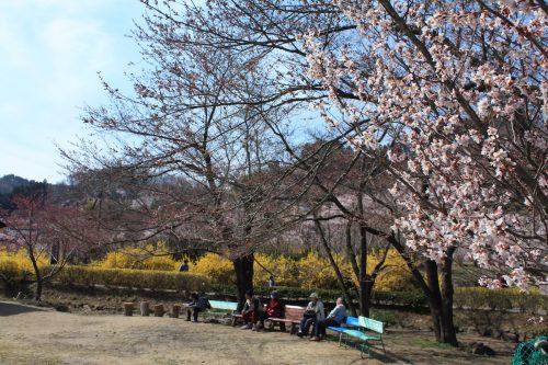 福島県福島市 花見山公園の情報 2019年4月5日 IMG_5712