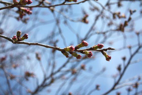 福島県福島市 花見山公園の情報 2019年4月5日 IMG_5714