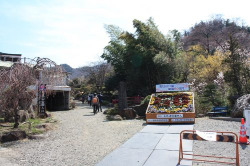 福島県福島市 花見山公園の情報 2019年4月5日 IMG_5716