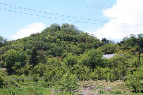 福島県福島市 花見山公園の情報 2019年5月7日 IMG_5993