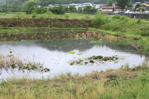 福島県福島市 花見山公園の情報 2019年6月10日 IMG_6046