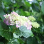 福島県福島市 花見山公園の情報 2019年6月10日 IMG_6050