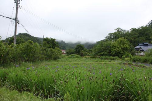 福島県福島市 花見山公園の情報 2019年6月10日 IMG_6053