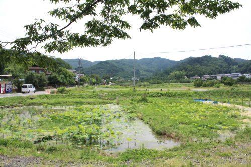 福島県福島市 花見山公園の情報 2019年7月3日 IMG_6124