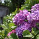 福島県福島市 花見山公園の情報 2019年7月3日 IMG_6134