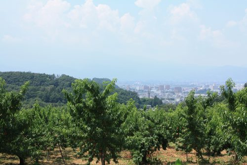 2019年8月6日福島県福島市 花見山公園の情報。市内夏霞