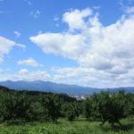 福島県福島市 花見山公園の情報 2019年9月12日 IMG_6221