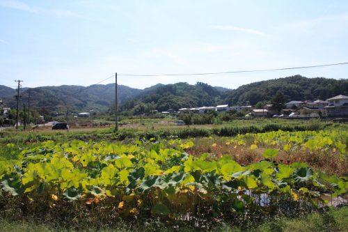 福島県福島市 花見山公園の情報 2019年10月1日 IMG_6445