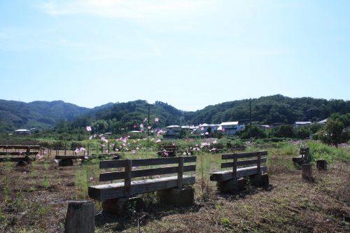 福島県福島市 花見山公園の情報 2019年10月1日 IMG_6457
