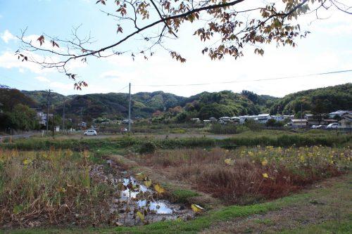 福島県福島市 花見山公園の情報 2019年11月5日 IMG_6691