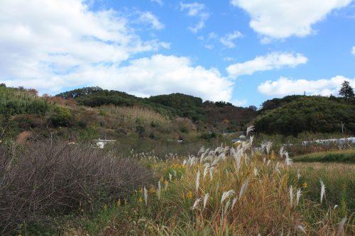 福島県福島市 花見山公園の情報 2019年11月5日 IIMG_6692