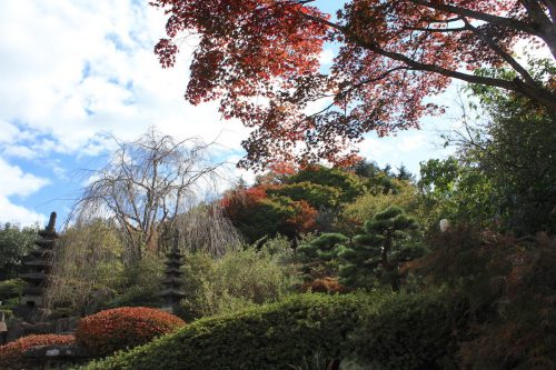 福島県福島市 花見山公園の情報 2019年11月5日 IMG_6695