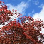 福島県福島市 花見山公園の情報 2019年11月5日 IMG_6696