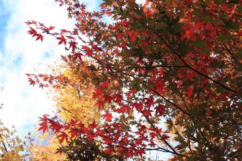 福島県福島市 花見山公園の情報 2019年11月5日 IMG_6698