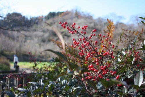 福島県福島市 花見山公園の情報 2019年12月9日 IMG_6796