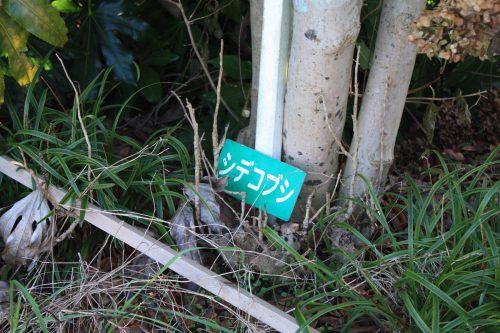 福島県福島市 花見山公園の情報 2019年12月9日 IMG_6802
