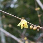 福島県福島市 花見山公園の情報 2020年1月7日 IMG_6818