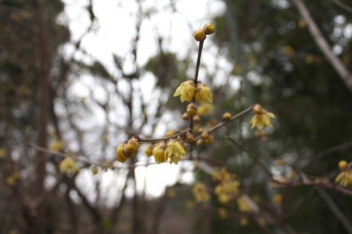 福島県福島市 花見山公園の情報 2020年1月20日 IMG_6831