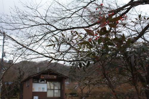 福島県福島市 花見山公園の情報 2020年1月20日 IMG_6834