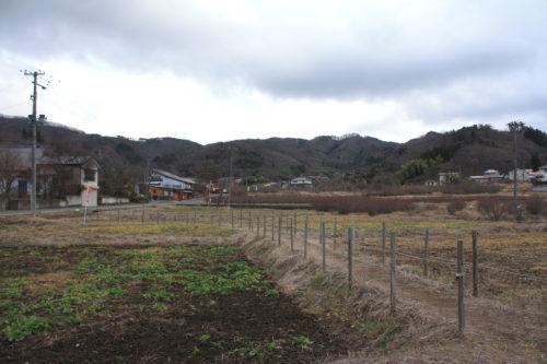 福島県福島市 花見山公園の情報 2020年1月20日 IMG_6837