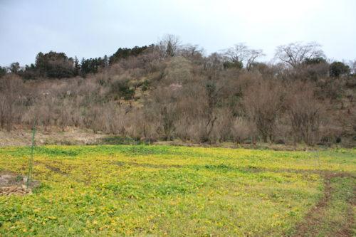 福島県福島市 花見山公園の情報 2020年2月5日 IMG_6839