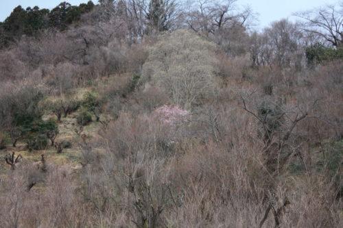 福島県福島市 花見山公園の情報 2020年2月5日 IMG_6840