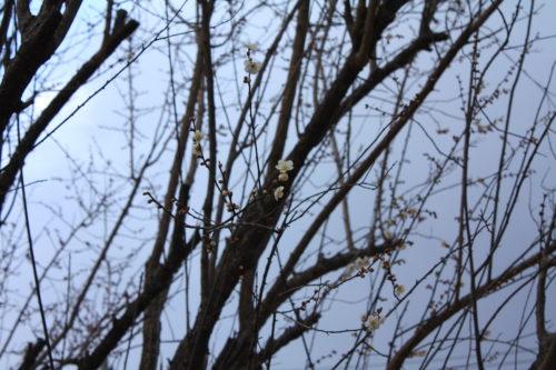 福島県福島市 花見山公園の情報 2020年2月5日 IMG_6842